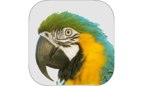 Macaw Agency Management System | Nest Innovative Solutions | Celent